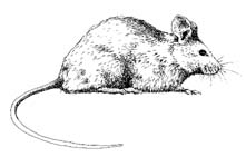 Mouse Removal Anderson, OH