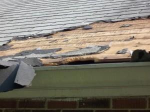 Extreme raccoon damage Highland Heights, KY