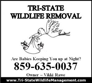 Tri-State Wildlife Management Crestview Hills, KY Squirrel Removal